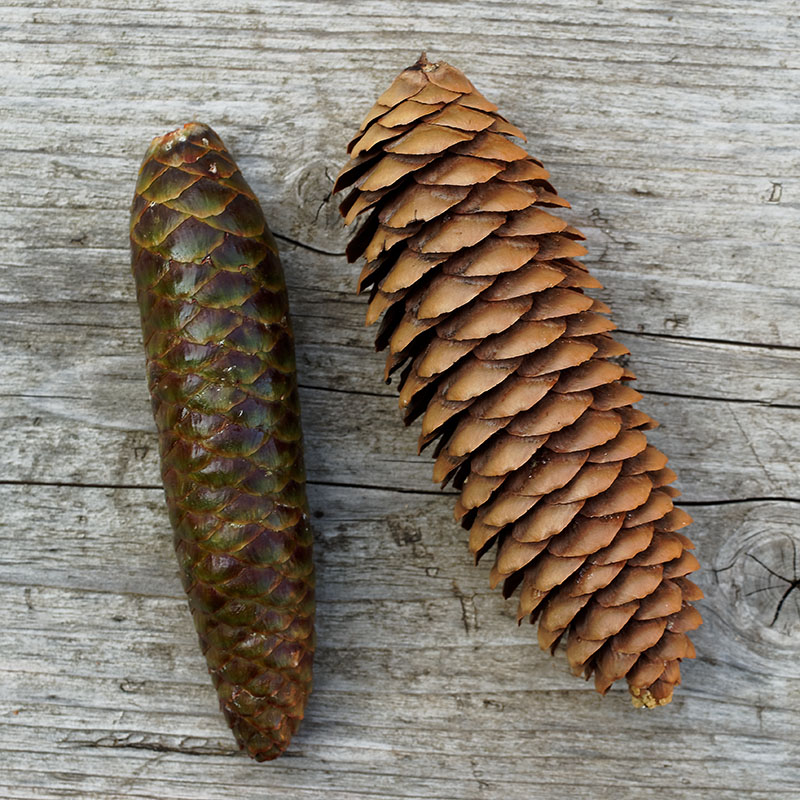 At alkaline pH the cuticles rise like the scales on a dry pine cone